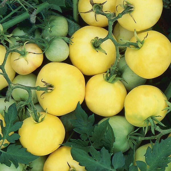 Tomato Garden Peach