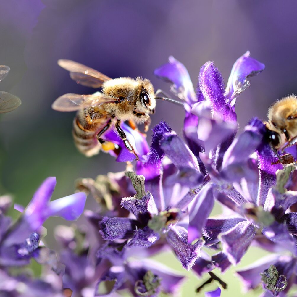 bees-4281171_1920